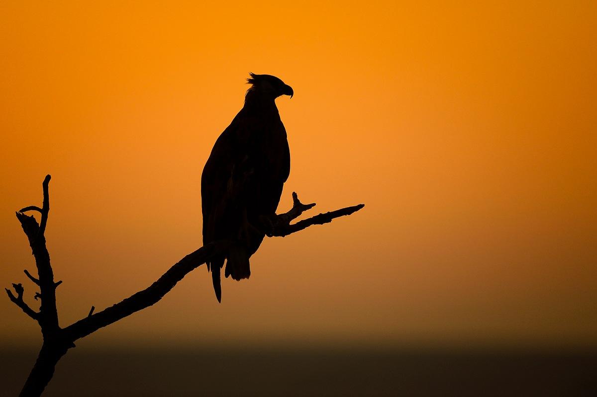 <em>Madagascan Fish Eagle (Haliaeetus Vociferoides). © Massimiliano Sticca.
