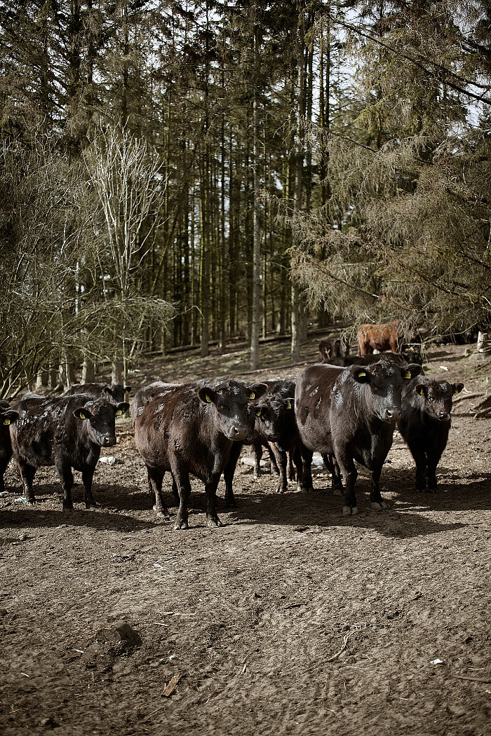 From the exhibition The farm in the centre by Sofie Amalie Klougart. © Sofie Amalie Klougart