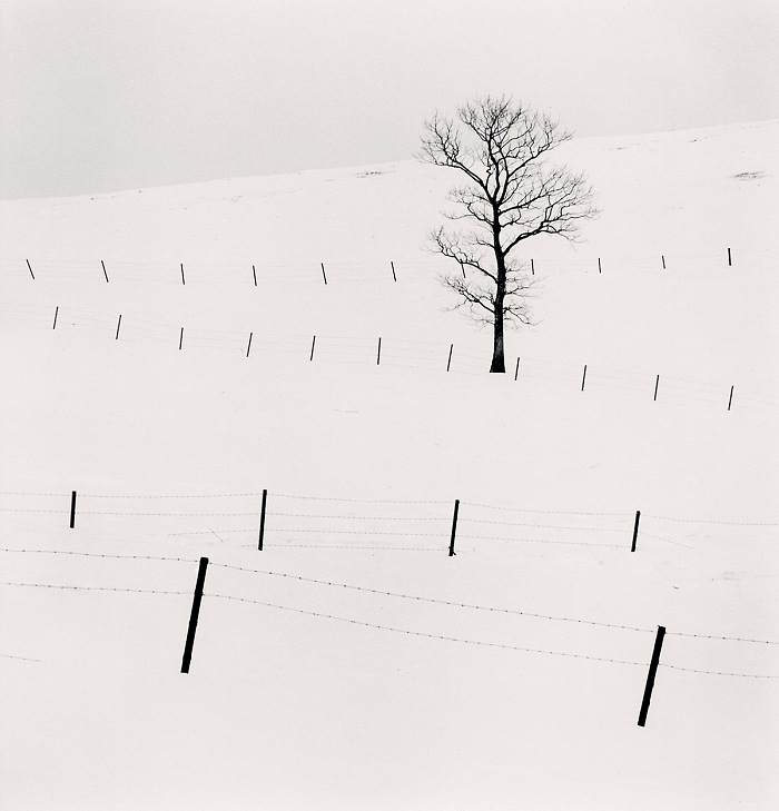 Michael Kenna, Tree and Twenty Eight Posts, 2013. © Micheal Kenna. Courtesy Galleria dell'Incisione