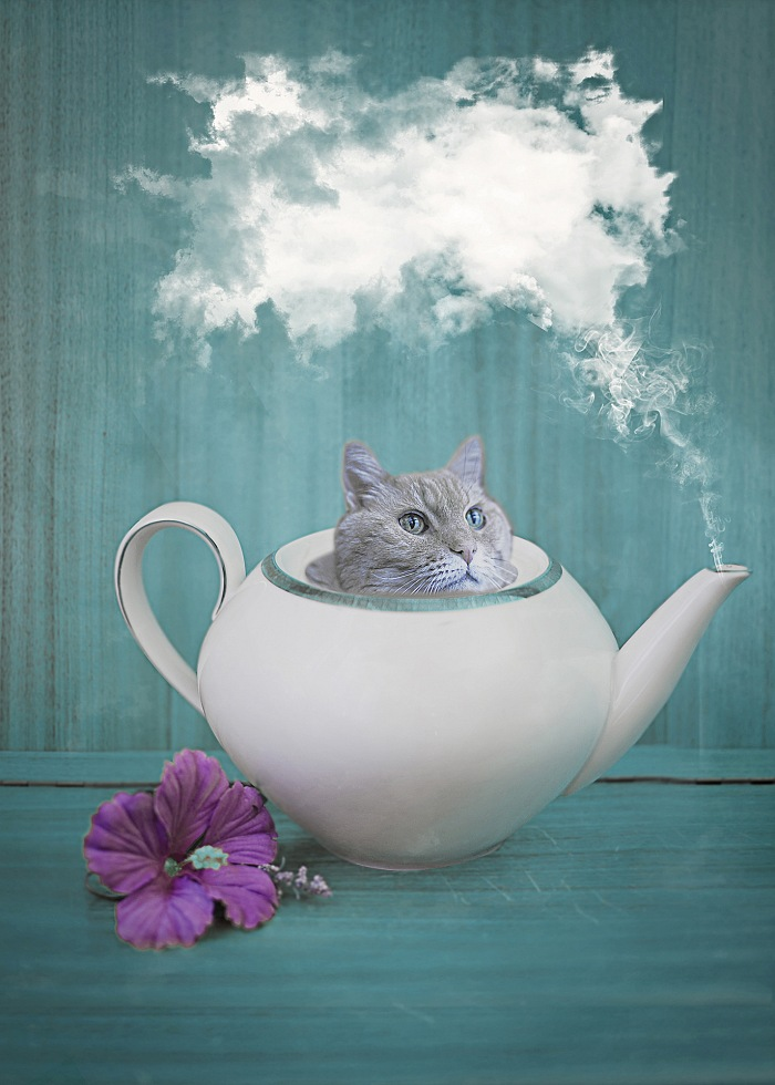 Cat Tea. © Erika Zolli