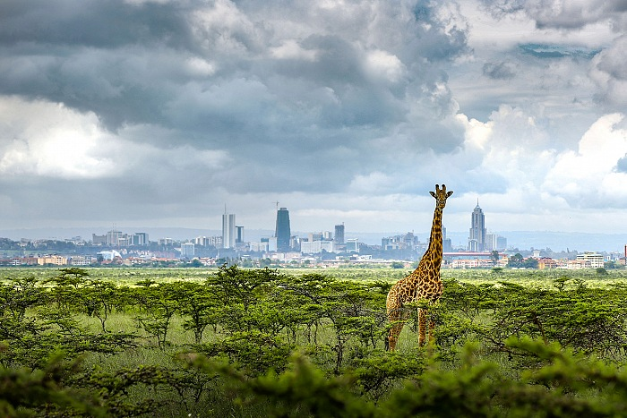 Paras Chandaria, Nairobi – The Jungle City. © Paras Chandaria.