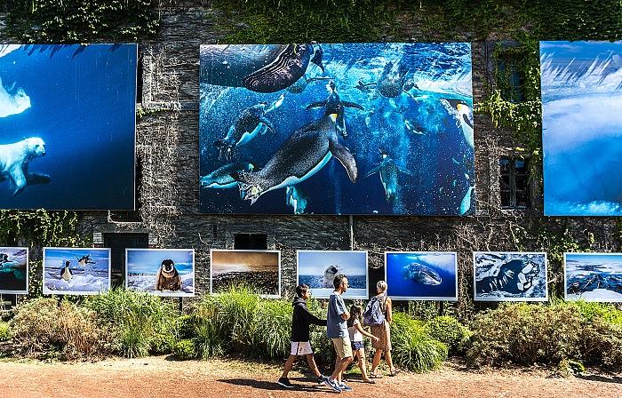 Un momento della visita alla mostra Sous les glaces, s'éteignent les espèces di Paul Nicklen. © FPmag.