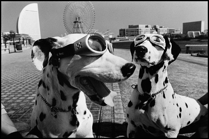 Elliott Erwitt, dalla serie Dogs. © Elliott Erwitt / Magnum Photos