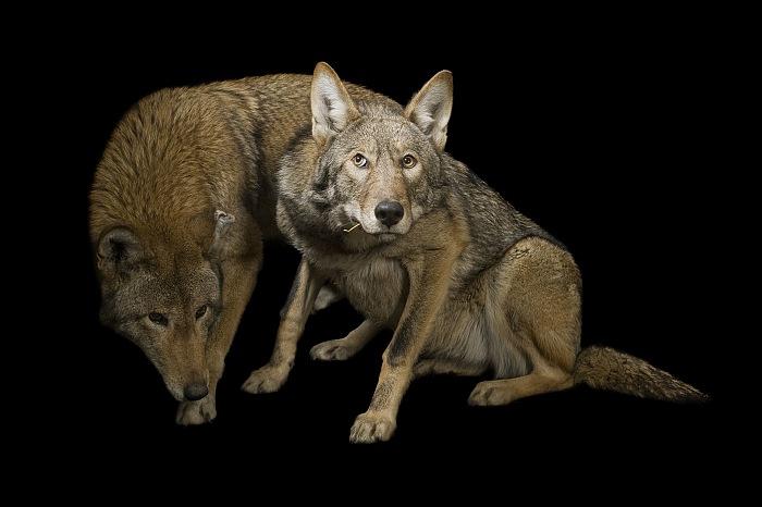 © Joel Sartore/National Geographic.