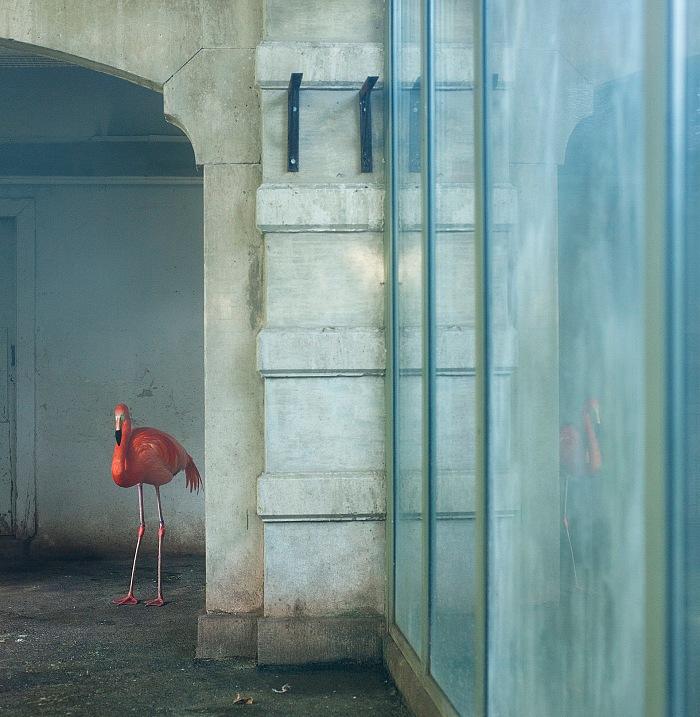 Eric Pillot, Flamant bleu. © Éric Pillot.