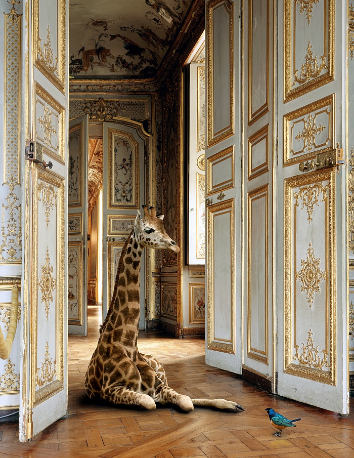 Karen Knorr, Grande Singerie, Musée Condé, Chantilly, France dalla mostra Fables in esposizione in rue Saint Vincent nell'ambito di Festival Photo La Gacilly 2018. © Karen Knorr.