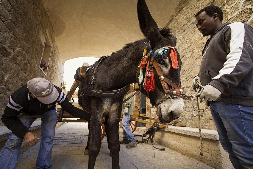 Gianfranco Ferraro, Momenti di integrazione anche sul lavoro a Riace. © Gianfranco Ferraro.
