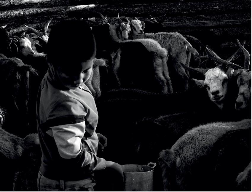 Sara Munari, Vanishing Shepherds. © Sara Munari.