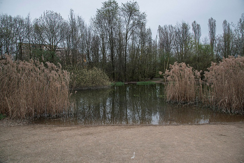 Pio Tarantini, Parco Nord, Milano. © Pio Tarantini.