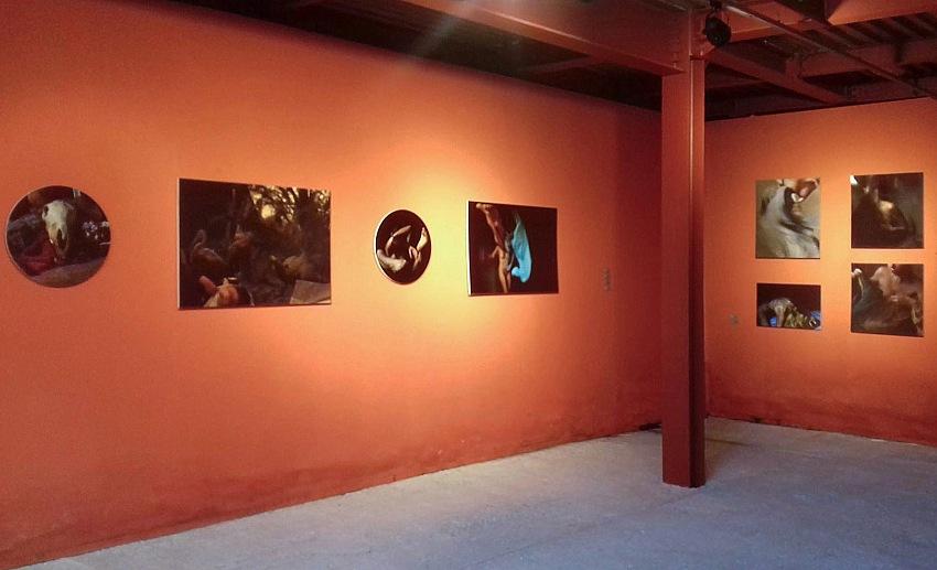 L'allestimento della mostra Dialoghi sulla sofferenza.